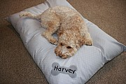 Snoozers - Personalised Dog Duvet